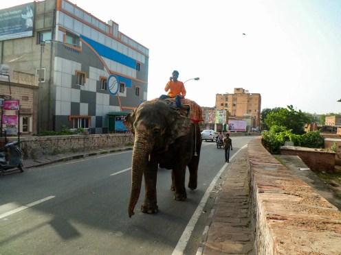 Elephant Straße Jodhpur
