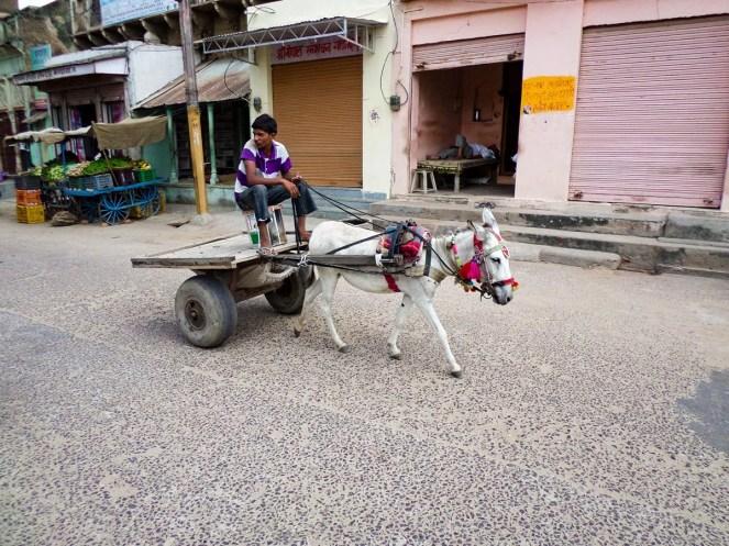 Eselkarre in Mandawa, Indien