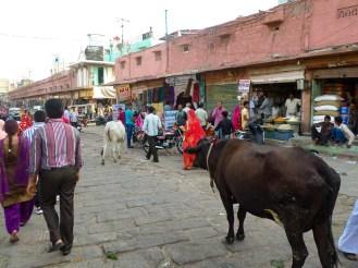 Heilige Kuh Jodhpur