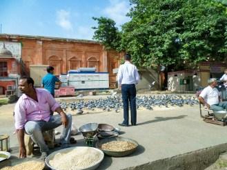 Tauben füttern Jaipur