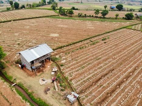 Knoblauchfeld Myanmar
