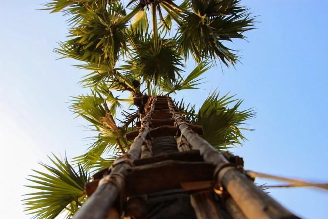 Myanmar Palmsaft