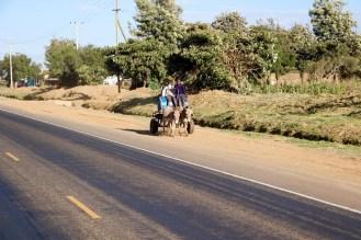 Esel Kenia