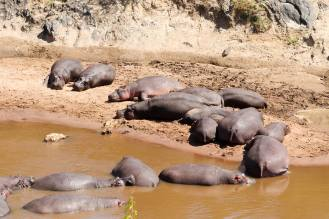 Flusspferde Kenia