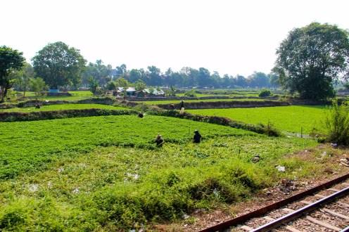 Bauer auf dem Feld Myanmar
