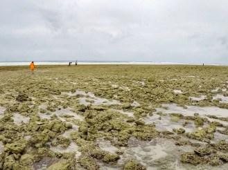 Korallenriff Sansibar