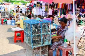 Vogel Verkauf Yangon
