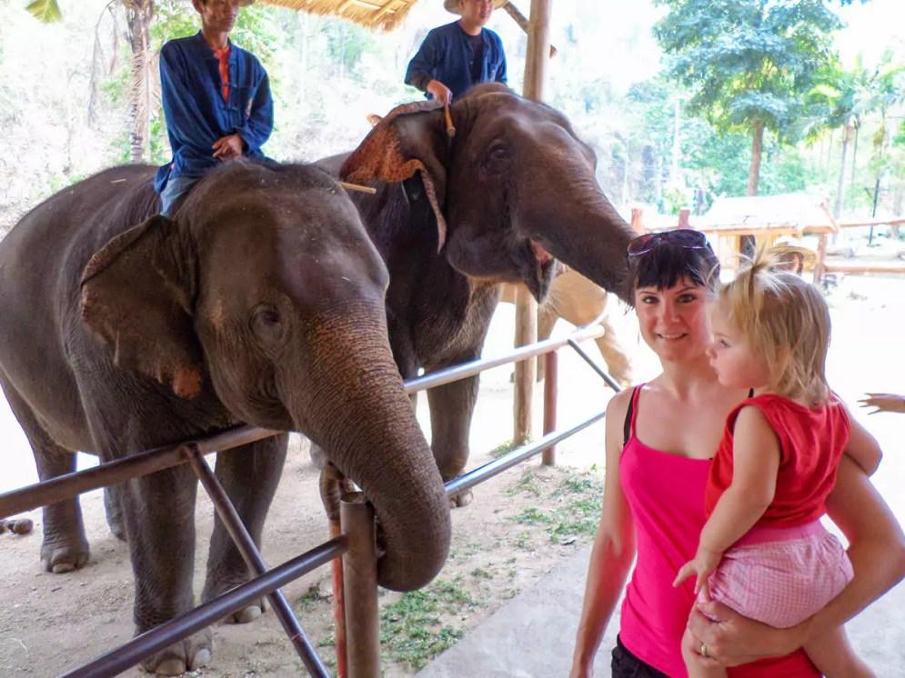 Elefanten streicheln im Thai Elephant Conservation Center