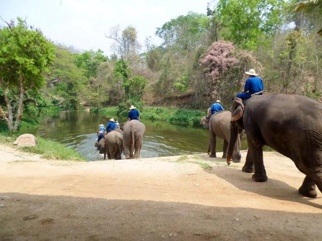 Thai Elephant Conservation Center Lampang