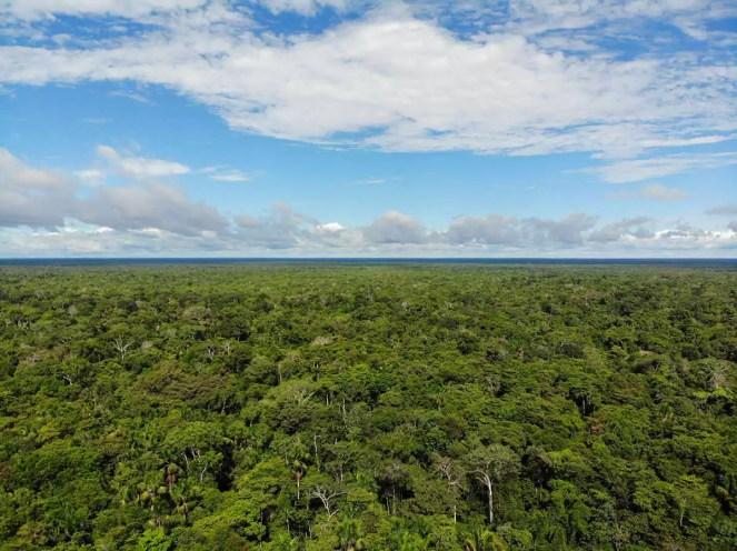 Amazonas Regenwald Drohnenaufnahme