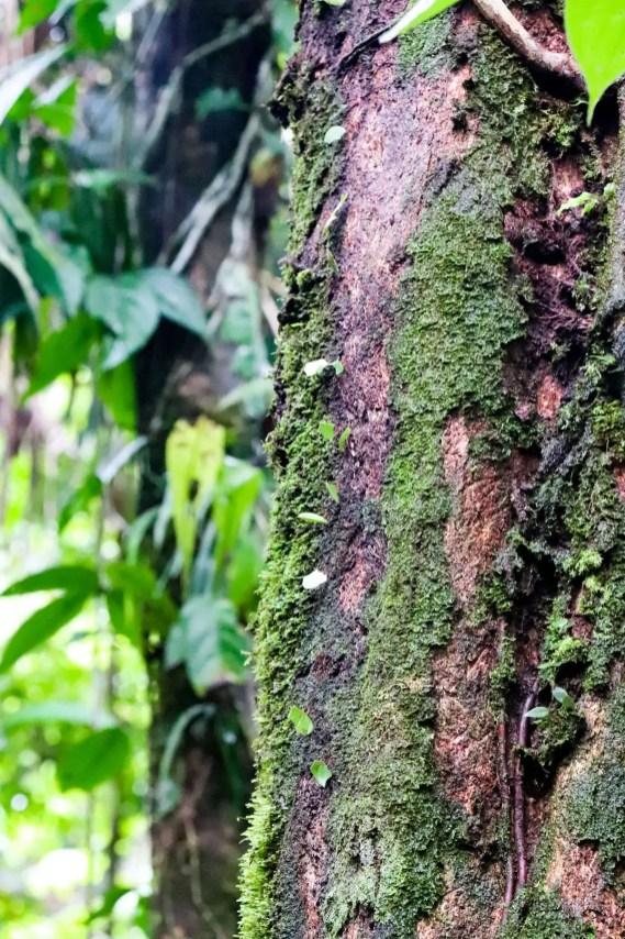 Blattschneiderameisen auf dem Baum