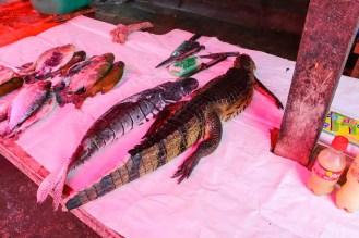 Kaiman auf dem Belen Market