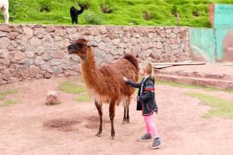 Lama streicheln im Ccochahuasi Sanctuary