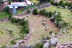 Schafe auf Taquile