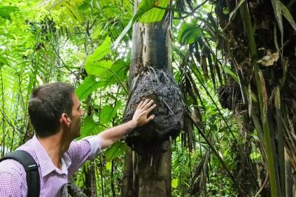 Termitenbau Dschungel Peru