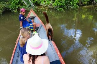 Wollaffe im Boot Peru