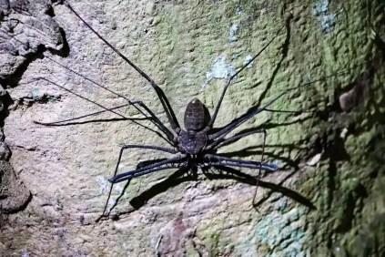 Skorpion Spinne