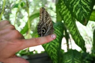 Aruba Schmetterlingsfarm