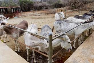 Eselreservatum Aruba