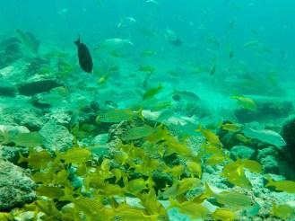Unterwasserwelt am Boca Catalina