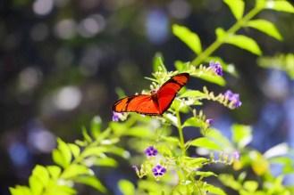 Schmetterling auf der Butterfly Farm