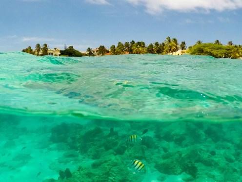 Snorkeling Boca Catalina