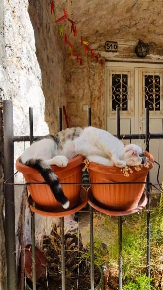 Katze Kotor