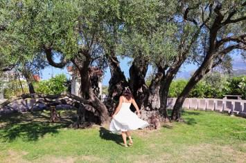 Olivenbaum in Bar