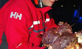 Hurtigruten Cruise: A King Crab Adventure