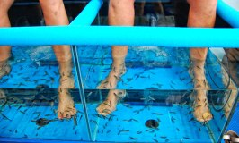 Fish Foot Spa – A Fish Pedicure in Costa del Sol