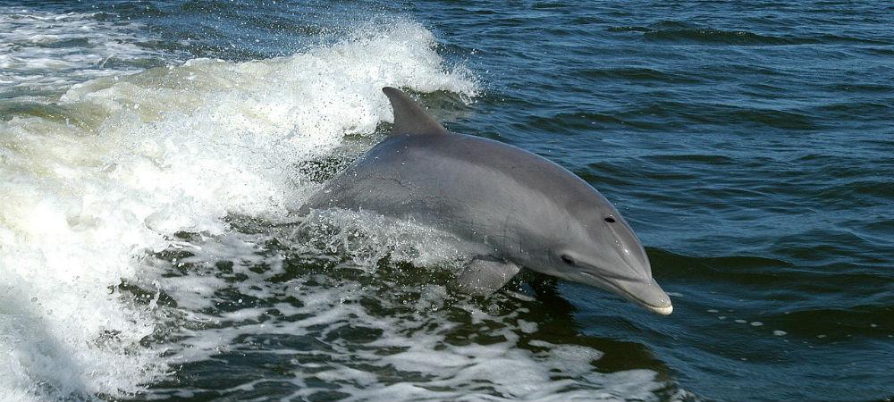 WhaleShark Swimming Cancun Dolphin TravelSmart VIP 5
