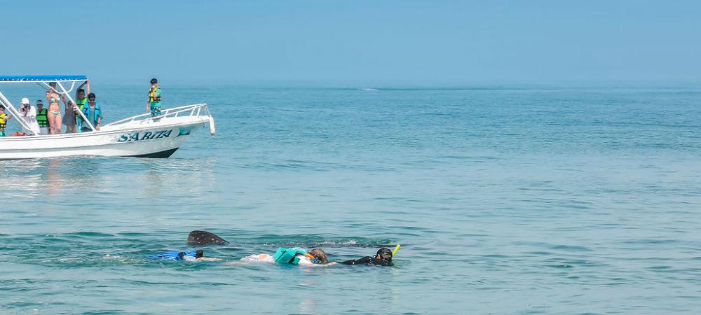 WhaleShark Swimming Cancun Snorkel TravelSmart VIP 3