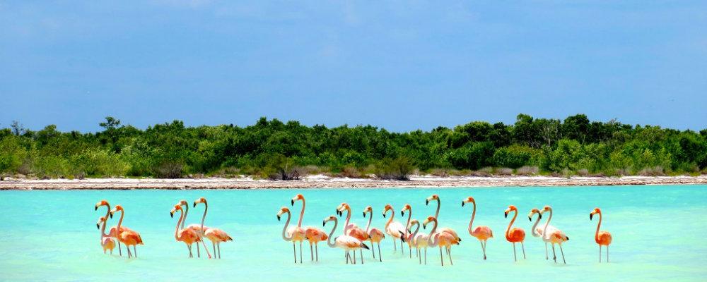 holbox Flamingos travelsmart vip