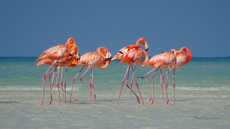 Mexiko-Rundreise-Isla-Holbox-Flamingos