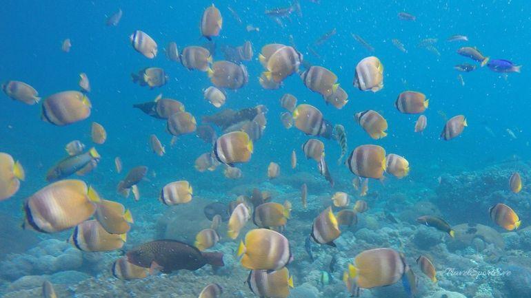 Fischschwarm auf der Nusa Lembongan