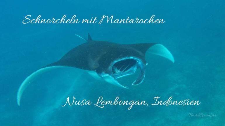 Nusa Lembongan Schnorcheln mit Mantarochen