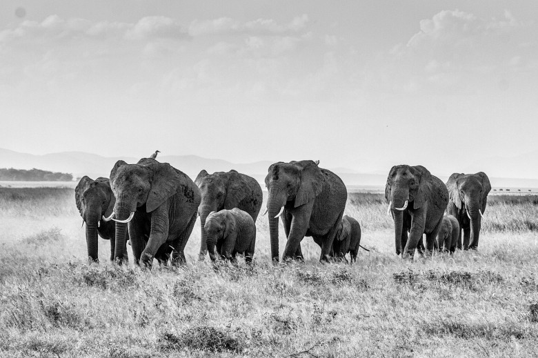 elephants-with-family