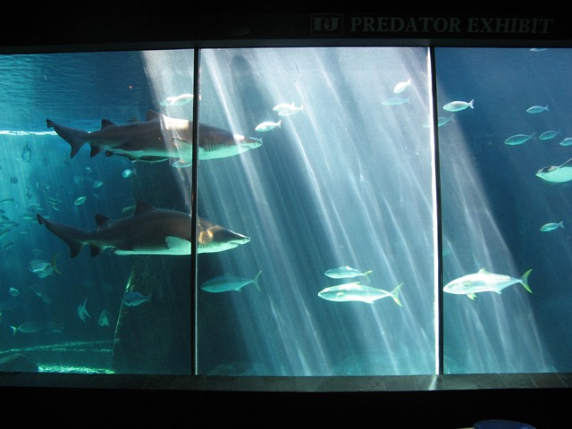 The predator exhibit at the Two Oceans Aquarium near the V&A Waterfront in Cape Town.