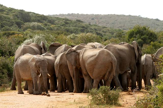 Addo Elephant National Park