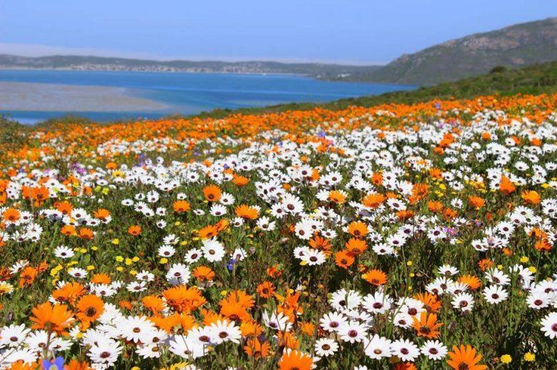 flowers west coast