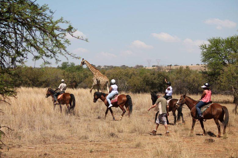 harties-horse-trail-safaris adventures activities
