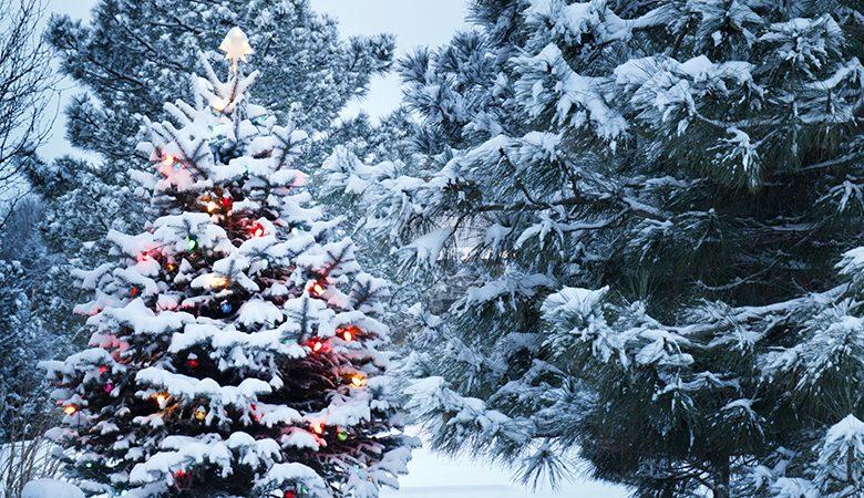 Christmas traditions UK vs US 5