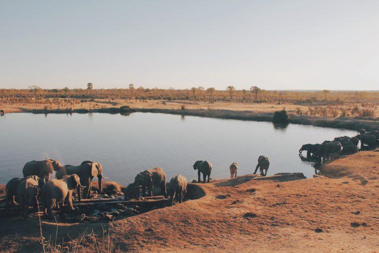 waterhole safari