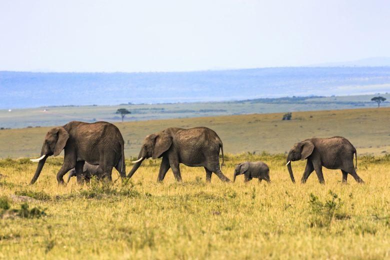 family travel elephants