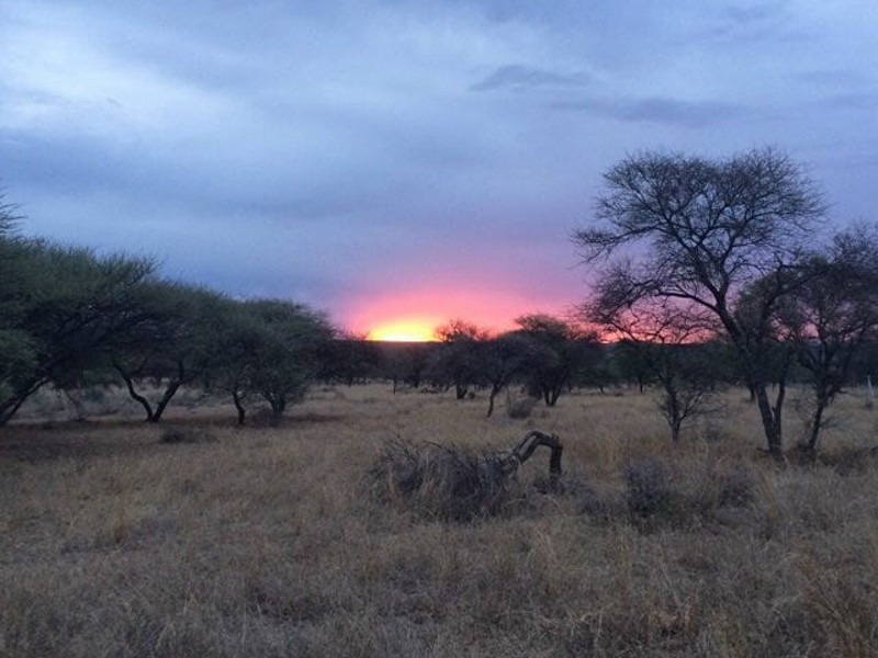 african-bushveld-sunset