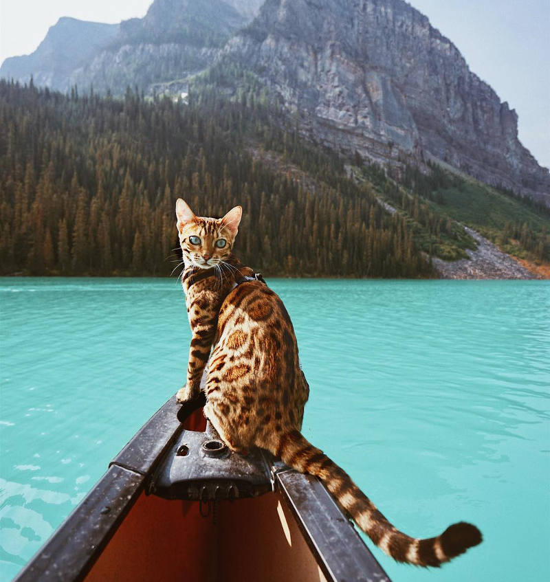 travel with cats