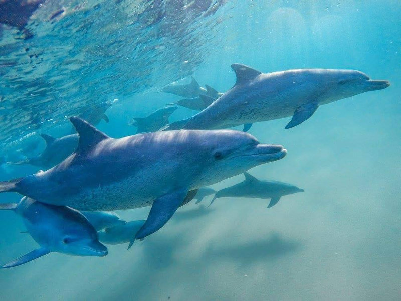 dolphins mozambique