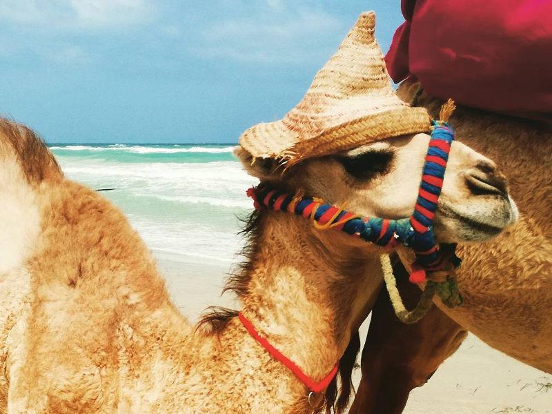 visit-tunisia-beach-camel