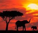 kenya_travels