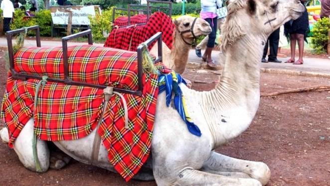 Camel Riding at Uhuru Park